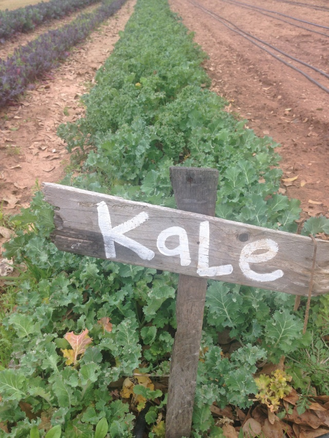 Local Appetite - Kale